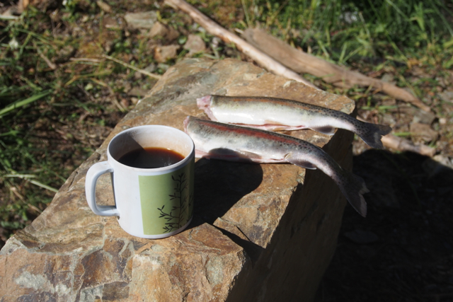 Coffee and Fish...Breakfast?